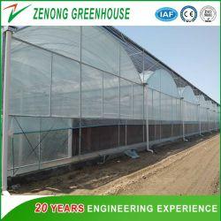Professional Multi-Span film plástico transparente de alta invernaderos para cultivos hidropónicos/Verduras/Flores/semilla de cría o el tomate y pepino/Plantación de fresas para la venta