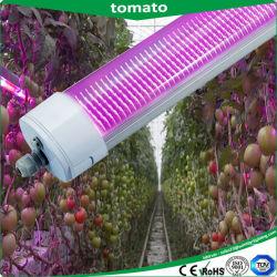 Distributeur en gros 150 W à LED IP65 grandir la lumière, la preuve de lumière LED Tri, la lumière LED Lampe, dispositif d'éclairage, mini projecteur