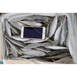 Jurel congelado marisco fresco pescado