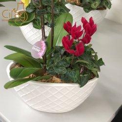 Maceta Oval de orquídeas con cruz