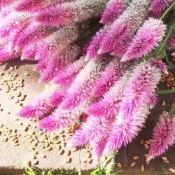 貫入が出ること切りたての葉のSalvia Crassifoliaのフェニックステールシダを装飾のために販売する