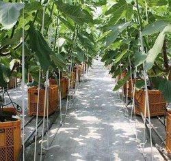 85GSM/90gsm/100gsm/120gsm de HDPE/PP Tecidos de produtos utilizados para a cobertura de solo