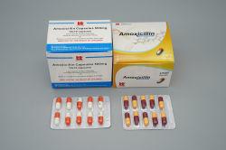 AmoxicillinはGMPを要約する