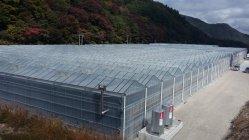 Bauen Poly House für Gemüse Obst Blumen zertifiziert von SGS