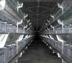 Autre type de cage/animal Husbanfry ferme avicole de poulet ou de bétail de l'équipement des machines/équipements/galvanisé à chaud de la cage de Volaille Poulet automatique Ferme /Batterie