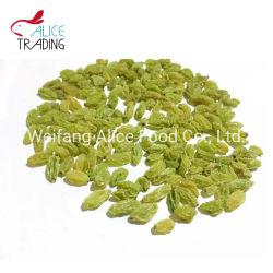 Xinjiang Passas Passas Verde forma longa e uvas secas de tamanho grande