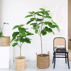 Nuovo albero artificiale progettato del Ficus dei bonsai della pianta della decorazione di plastica della casa da vendere