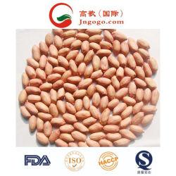 Nuovo kernel di alta qualità di arachidi di crop con pelle rossa