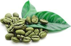 Extrait de grains de café vert Total acides chlorogénique 50 % 25 % de la HPLC de café vert du café Arabica (bean)