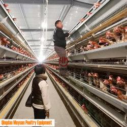 Contrôle automatique galvanisé à chaud 4 niveaux ferme avicole de poulet de batterie/le matériel agricole pour le bétail couche/hen montée maison de ferme