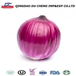 Congelado IQF tira de la cebolla, los dados en Venta caliente