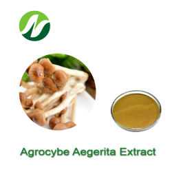 고품질 좋은 가격 Polysaccharides10%-50% Agrocybe Aegerita 추출 차 나무 버섯 추출