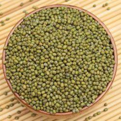 Nueva cosecha de frijol Mung de alta calidad