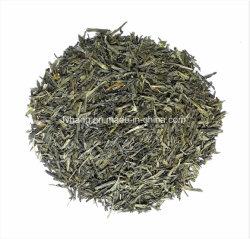 蒸気を発した緑茶(Secha) C