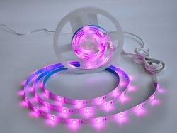 indicatore luminoso di striscia astuto di 5m SMD 2835 RGBW WiFi LED