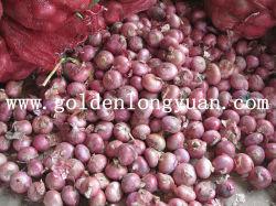 Frais d'Oignon Oignon Oignon rouge jaune