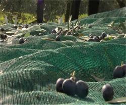 Rete verde oliva dell'accumulazione usata agricoltura verde scuro UV di colore dell'HDPE