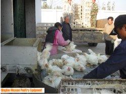 Vertikaler Typ Bratrost-Ernten/Brüter-/Hünchen-Huhn-Rahmen für Huhn-Geflügelfarm