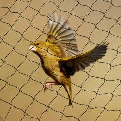 7GSM-50GSM PE Pomar Ave Agrícola Netting Anti Bird para proteção de compensação
