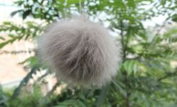 自然な毛皮の球のキツネの毛皮の衣服ES628-19