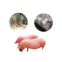 Linea di macello del macello della macchina elaborante della carne del maiale della strumentazione del mattatoio del maiale