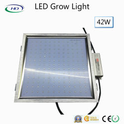 42W LED wachsen helles Panel 300*300