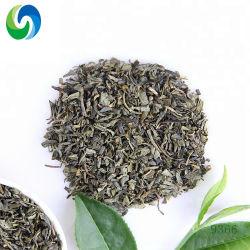 Usine Importateurs de thé en vrac 9366 Chunmee chinois du thé vert