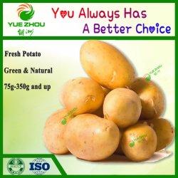 Haut de la qualité de la nouvelle récolte de pommes de terre fraîches (150g et jusqu')
