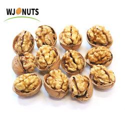 신지앙(Xinjiang)의 쉘(Shell)에 있는 월넛(Wutnut)의 저렴한 가격입니다