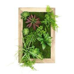 Las plantas suculentas artificial y bastidor de pared con el precio de fábrica de Moss