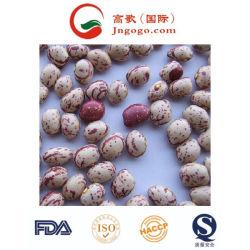 Boa qualidade de exportação luz chinês fresco salpicados Feijão
