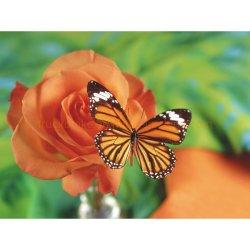 Amor de Butterfly Diamond Óleo Arte Diamond Dlh Pintura1014