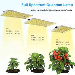 2020 il nuovo spettro completo LED di 100W 200W 300W coltiva la scheda che di Quantum degli indicatori luminosi il LED coltiva il comitato LED si sviluppa chiaro per la coltura idroponica dell'interno di coltura del seme della pianta del fiore coltiva la tenda