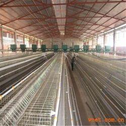 Azienda avicola perfetta della struttura d'acciaio di disegno della disposizione
