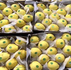 Super qualidade para a exportação de limão fresco