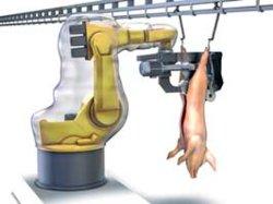 돼지 도살 기계장치 또는 돼지 도살 공구