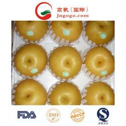 L'exportation de la nouvelle récolte de bonne qualité FRAIS POIRE