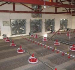 Automatische kippenhuis broiler feed Line voor pluimveeteelt
