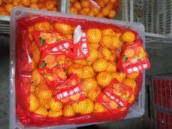 マレーシアへのNanfengのマンダリンオレンジのエクスポート