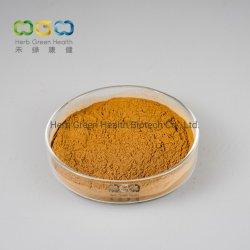 Extrait de fruits Privet brillant avec acide Ursolic 0,5 %, acide Oleanolic 1,0 % pour la santé oculaire et en abaissant la pression artérielle