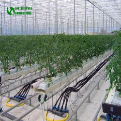 GlasGgreenhouse Felsen-Wolle-Substratfläche-Kultur im Soilless Bearbeitung-System wird für Tomate-Bearbeitung verwendet