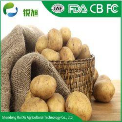 Diplomabstands-frische Tisch-Kartoffel pro Tonne