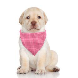 PET Bandana Bibs sjaal Wasbaar Polyester Printing kerchief Pet Accessoires