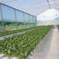 Comercio al por mayor en el interior de PVC de cultivo hidropónico de canal Nft de verduras de hoja de lechuga