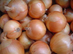 New Crop Chinese Red Onion Yellow Onion