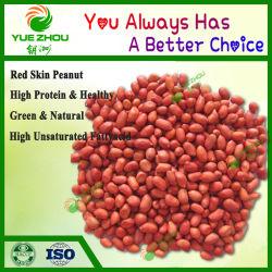 Amendoim pele vermelha orgânico 38/42 Raw Kernels de amendoim para Venda com preço