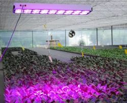 Volles Spectrum 300W LED Plant Grow Light IR UVBulb Veg Flower Hydroponics