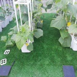 2021 Nuevo diseño inteligente de gran potencia doble interior/exterior Hidroponía Pepino Tomate Equipo solar jardín