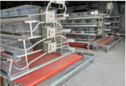 La galvanización de crianza de aves de corral pollo Ladder-Type jaula para la granja