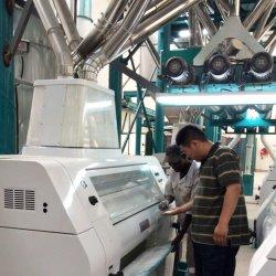 Norma europeia de farinha de trigo tornando o processamento da máquina planta da fábrica